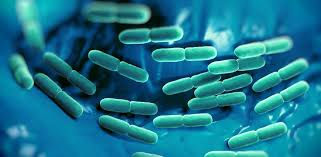 бактериальные закваски для сыра