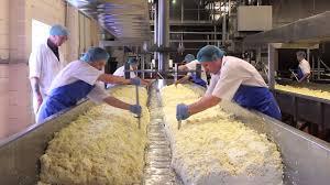 сычуги для производства сыра