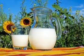 молоко для производства сыров